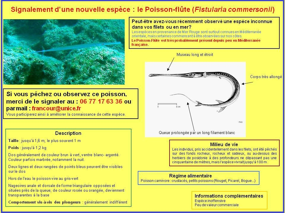 AMPN Poisson Flute